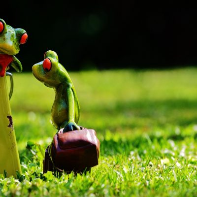 frogs-1407409